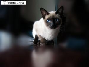 Chinacat20080425