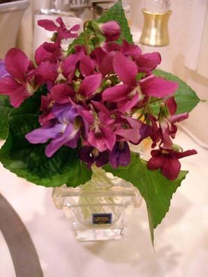 Violet2008web4