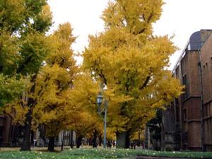 Autumnfoliage20081