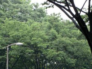 Shibuya2009julyweb1