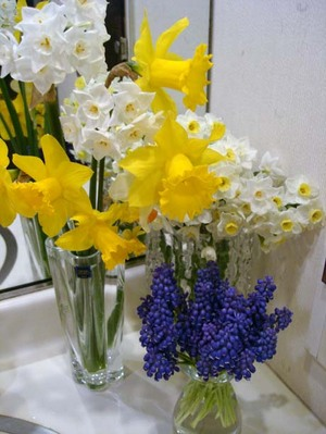Narcissusweb1