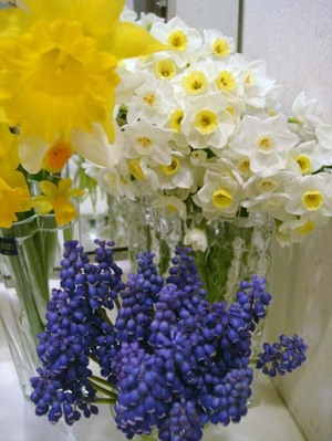 Narcissusweb3