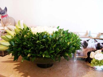 Blumen_nach_myrtleweb2