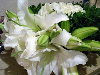 Flowerof_myrteweb2